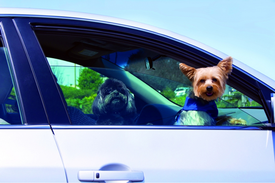 Tips for Traveling with Pets | Travel Dreamz Travel Agent